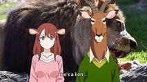 Lion meets with his girlfriend's parents | Murenase! Seton Gakuen (Seton Academy: Join the Pack!)