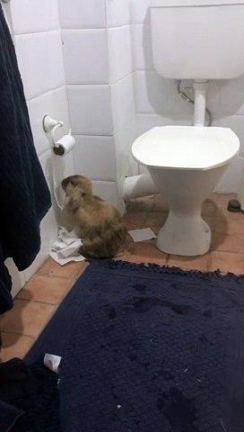 Ce lapin dévore le stock de papier toilette de son maitre... Bien fait!