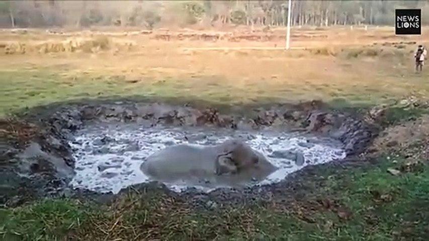 Un éléphanteau piégé dans la boue sauvé par une pelleteuse