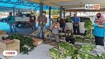Petani Cameron Highlands sumbang sayur pada golongan memerlukan