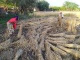 राजसमंद में28 एमएम बारिश, फसलों में हुआ नुकसान