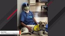 Sweet Therapy Dog Offers Comfort To Doctors Battling Coronavirus