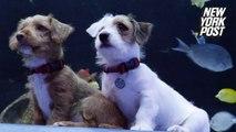 Georgia Aquarium's puppies are adorable and adoptable