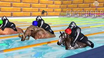 Learn Colors with Gorillas Riding Animals Swimming Race eat Fruits colors Cartoon for Children