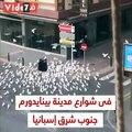الطيور الجائعة بسبب كورونا تطارد سيدة عجوز بشوارع إسباينا