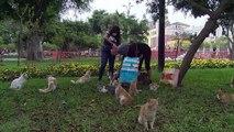 Voluntarios desafían al coronavirus para cuidar a gatos y perros en Perú