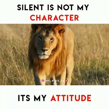 Lion Attitude Video Dailymotion