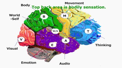 The brain science of medimotion secret of creativity of Life Rhizome Lee