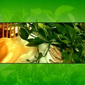 《绿萝花》第24集 梅婷、蒋恺、白凡主演都市爱情剧 | Green flower