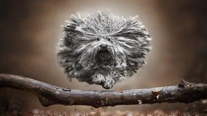 Spectaculaire beelden van honden in de lucht