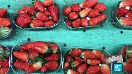Coronavirus pandemic: supermarkets turn to French farmers to supply food