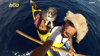 Rescued Stray Dog Joins Spanish Kayaker on Seafaring Adventure!