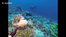 Scuba divers in Indonesia come face-to-face with octopus as it changes colour several times