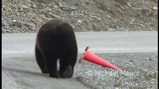 Les employés de la voirie remplacés par des ours...