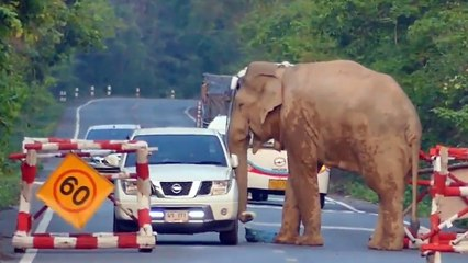 Un éléphant affamé bloque une voiture pour voler des fruits