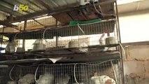 Lucky Rabbit! Nigerian Pet Shop Sees Boom In Rabbit Sales During Coronavirus Pandemic