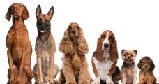 Votre race de chien préférée en dit long sur vous
