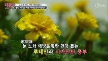 눈 노화 막는 꽃?❀ ❛이것❜으로 눈 건강 사수하자!