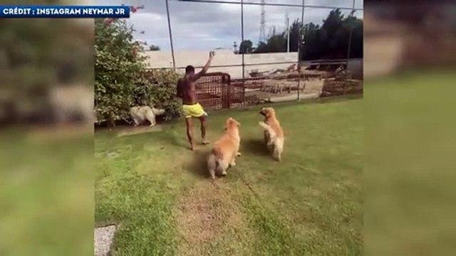 L'entrainement personnalisé de Neymar avec ses chiens