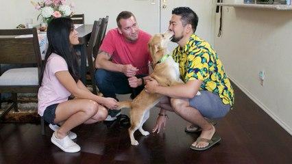Lucky Dog - Maya