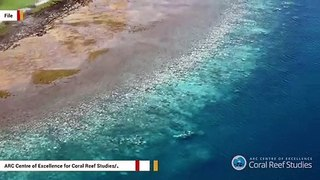 Great Barrier Reef Reportedly Experiences Most Widespread Bleaching To Date