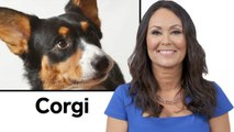 Every Dog Breed Explained (Part 1)