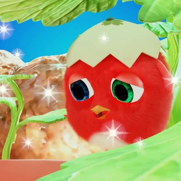 Cuckoo 2020 - Compilation Crazy CucKoo # 40 - New Cartoons for kids
