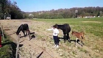Naissances en temps de confinement à la ferme des Buis à Valentigney