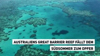 Australiens Great Barrier Reef fällt dem Südsommer zum Opfer
