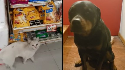 Clever Stray Cat Finds Forever Home & Sweet Pup Protects Family's Bread
