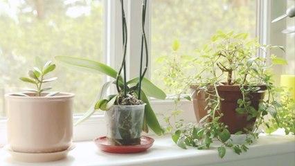 So pflegst du deine Zimmerpflanzen richtig