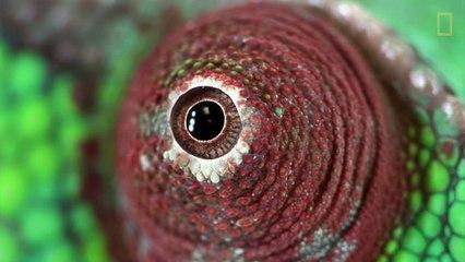 Proyecto Photo Ark, retratar la mayor cantidad de animales antes de que desaparezcan