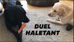 Cette vidéo de chiens en confinement commentée comme un match est hilarante