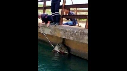 Nusaybin'de sulama kanalına düşen Kurt, itfaiye tarafından kurtarıldı