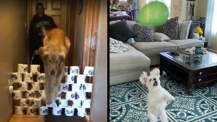 Cute Dogs Love Their At-Home Workouts