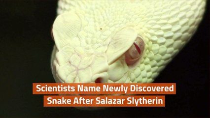 A New Snake Discovered