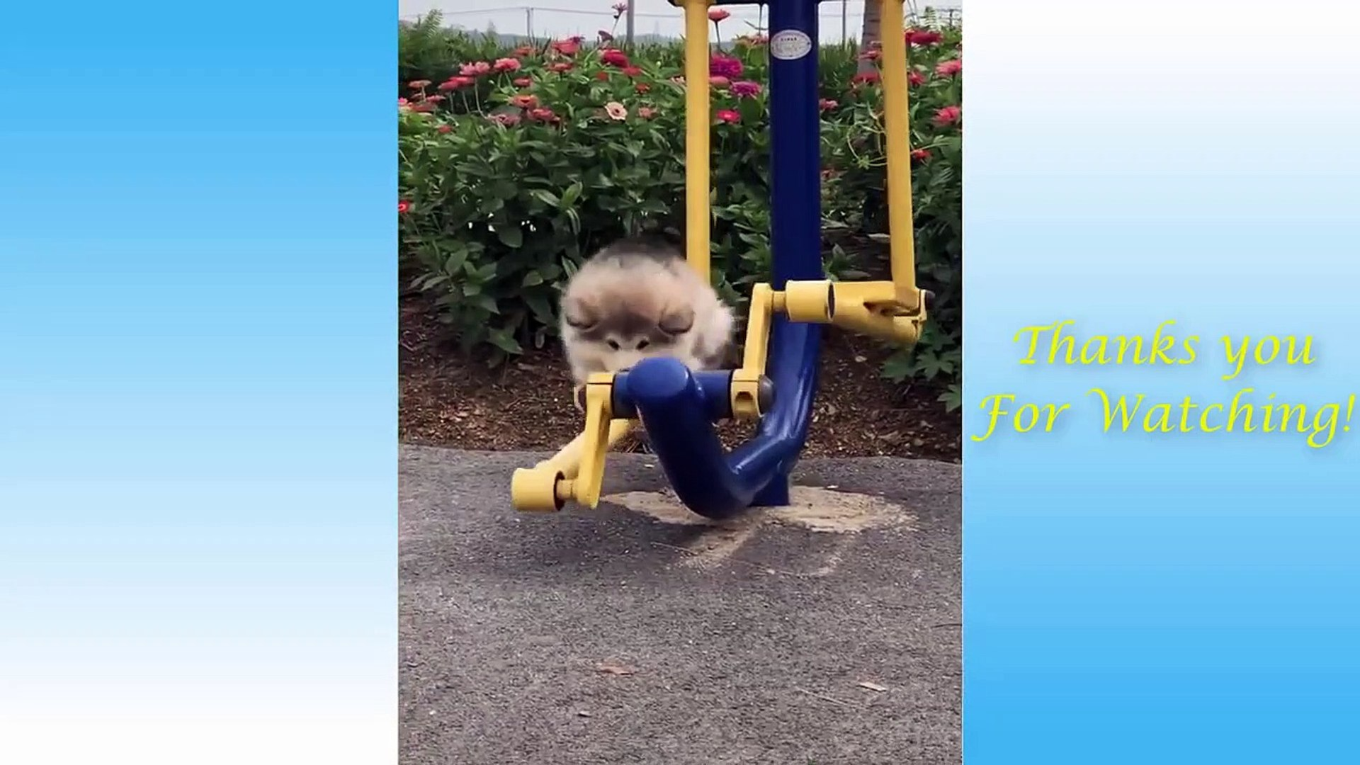 Cute Pets And Funny Animals Compilation #4 - Pets Garden