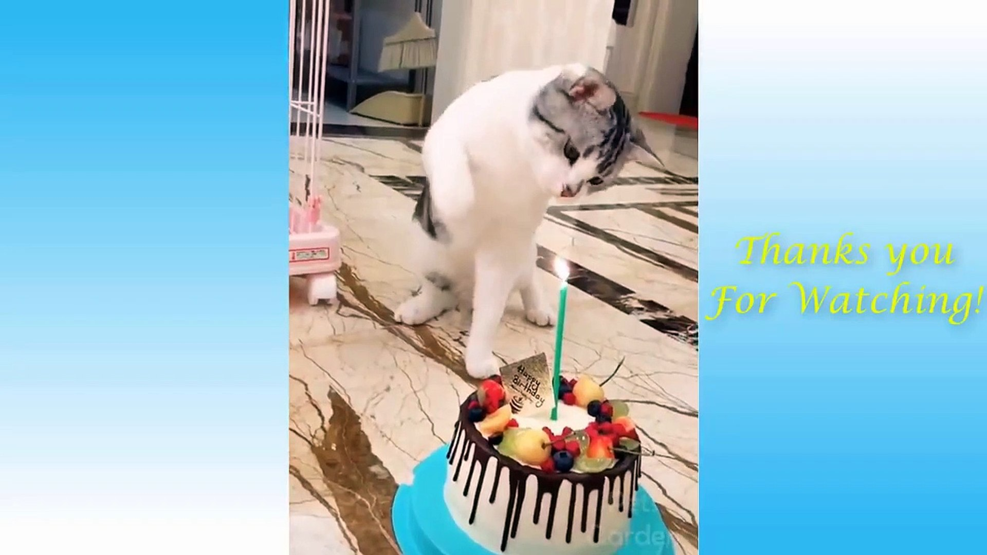 Cute Pets And Funny Animals Compilation #16 - Pets Garden