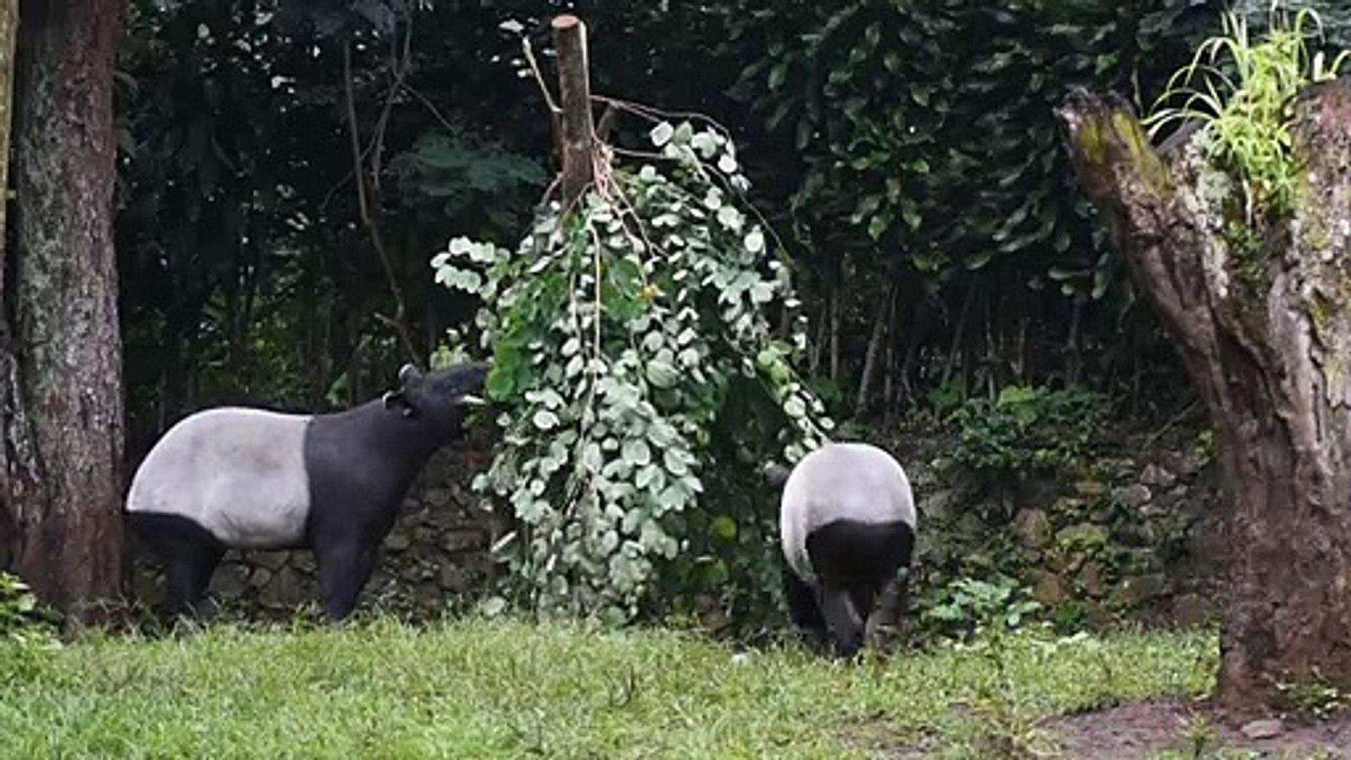 فيروس كورونا يدفع الحيوانات في حدائق الحيوان في إندونيسيا إلى حافة المجاعة