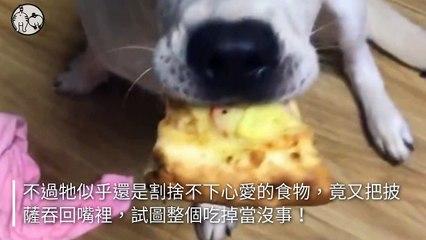 petmao_nownews-copy1-20200502-17:22