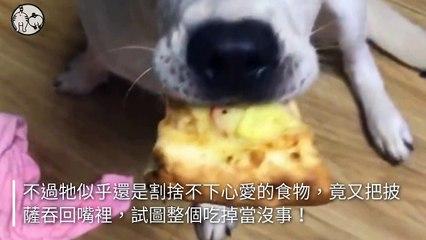 petmao_nownews-copy2-20200502-17:22
