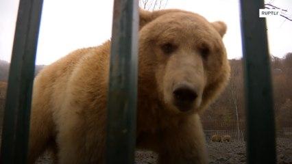 В Грузии профессиональный актер основал приют для медведей с тяжелой судьбой