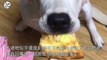 petmao_nownews-copy3-20200504-20:01