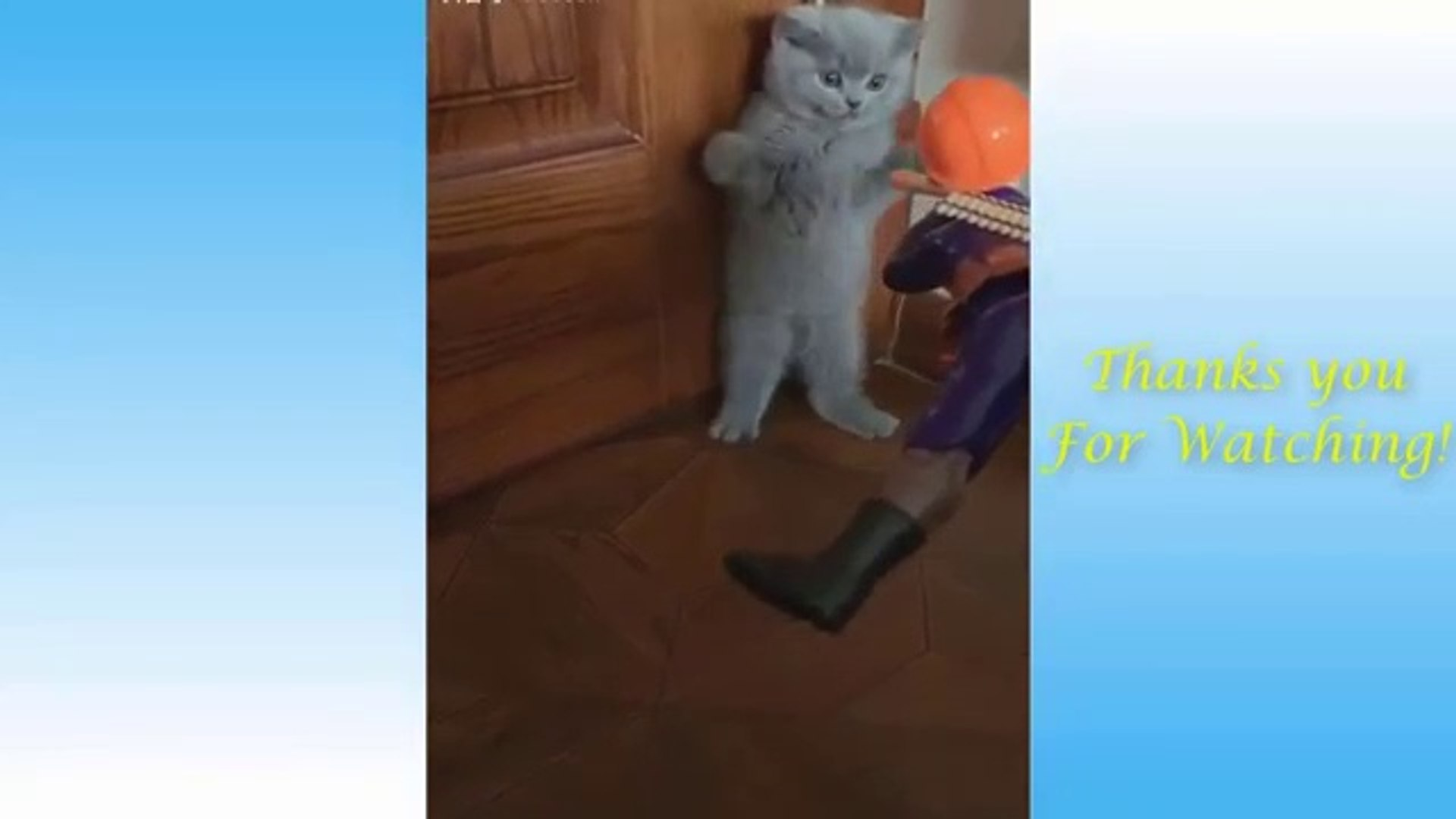 Cute Pets And Funny Animals Compilation #1 - Pets Garden