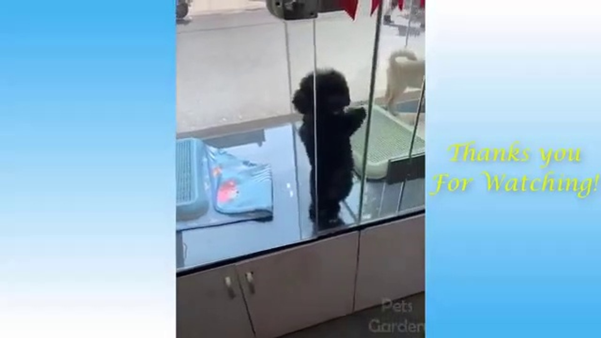 Cute Pets And Funny Animals Compilation #2 - Pets Garden
