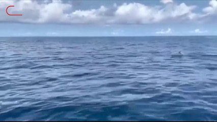 พบฝูงโลมาปากขวดกว่า 50 ตัว ใกล้เกาะสิมิลันที่ออกมารวมตัวกันว่ายน้ำโชว์กลางทะเล จ.พังงา