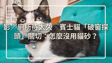 petsmao.nownews-copy4-20200508-20:00