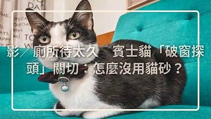 petmao_nownews-copy2-20200508-20:00