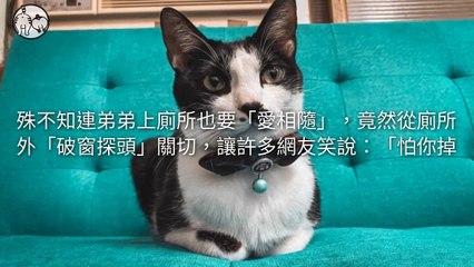 petmao_nownews-copy3-20200508-20:01