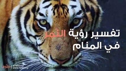 النمر في المنام وتفسير رؤية النمور في الحلم